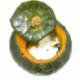 Potimarron vert garni cuit au four