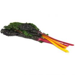 Blettes multicolores conversion bio (1kg)