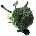 Brocoli (pièce 500g)