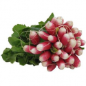 Radis roses (1 botte)