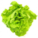 Salade laitue (pièce)