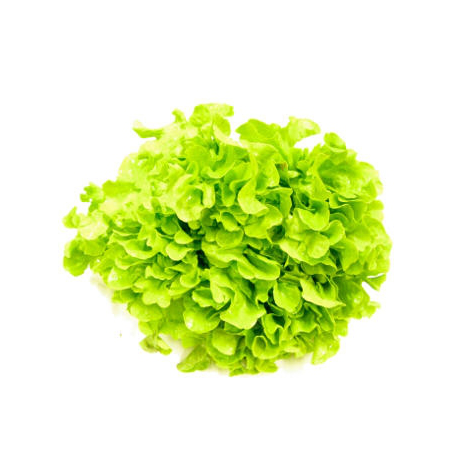 Salade feuille de chêne (pièce)