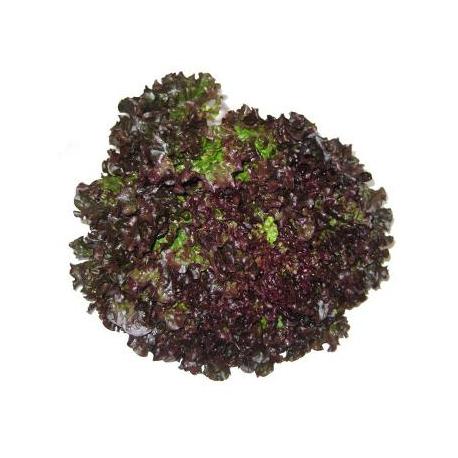 Salade batavia brune (pièce)