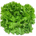 Salade batavia blonde (pièce)