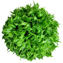 Salade Reine des glaces bio (pièce)