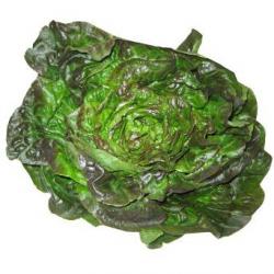Salade rougette (pièce)