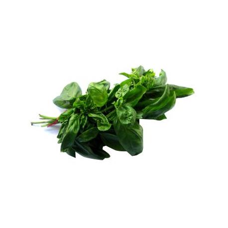 Basilic (1 botte)