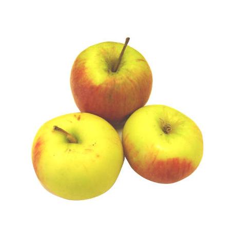 Pommes Initial bio (1kg)