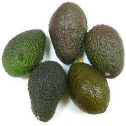 Avocats bola bio (5 petites pièces)