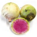 Radis asiatiques bio (roses violets ou verts) (500g)