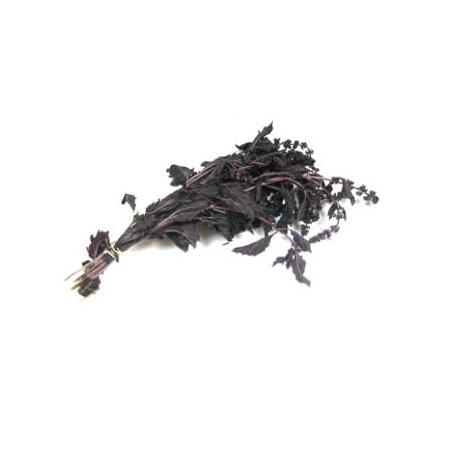 Basilic violet (1 botte)