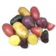 Pommes de terre nouvelles couleur conversion bio (1kg)