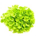 Salade bio (piece) (feuille de chêne ou batavia ou laitue verte)