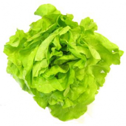 Salade laitue beurre bio (petite piece)