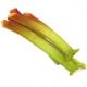 Rhubarbe bio (1kg)