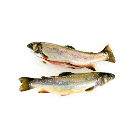 Truites blanches (2 poissons entiers sous vide, 2x250g)