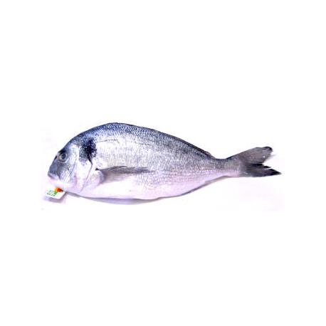 Dorade bio (1 poisson, 300g environ)