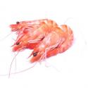 Crevettes bio gros calibre (300g)