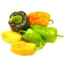 Poivrons bio de couleur (1kg)