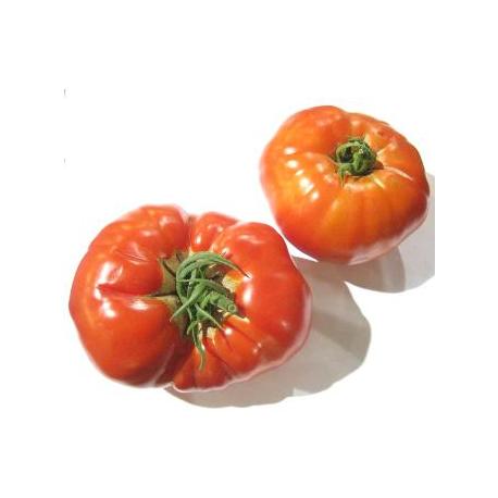 Tomate Coeur de boeuf (1kg)