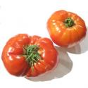 Tomate Coeur de boeuf bio (1kg)
