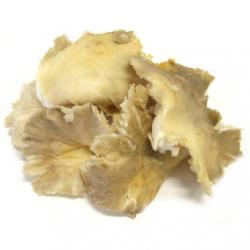 Pleurotes fraîches (500g)