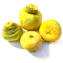 Navets jaunes boule  bio (500g)