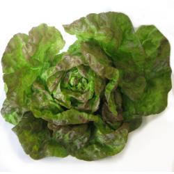Salade rougette bio (pièce)