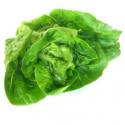 Salade sucrine bio au poids (300g environ)