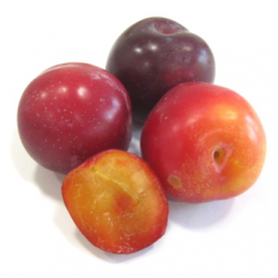 Prunes rouges bio (kg)