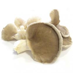 Pleurotes fraîches Isère (300g)