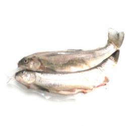 Omble chevalier (2 poissons entiers sous vide, 2x500g)