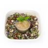 Green salade de sarrasin germé, sauce à l'huile de noix (1 pers)