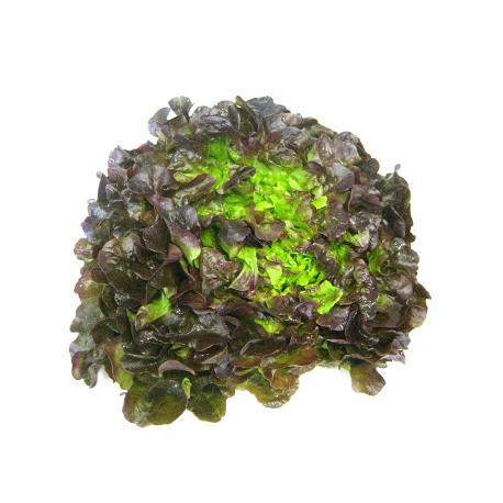 Salade feuille de chêne brune (piece)