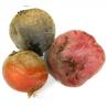 Betterave multicolore bio (blanche, rouge, jaune,...) (3kg gros calibres)