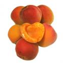 Abricots à confiture (2.5kg)