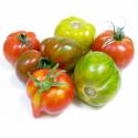Tomates de couleur bio (assortiment de 1kg)