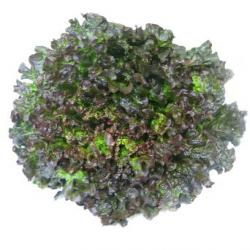 Salade Grenobloise (piece)