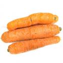 Carottes bio (500g)