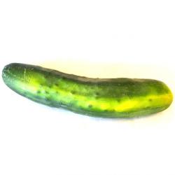 Concombre épineux bio (pièce)