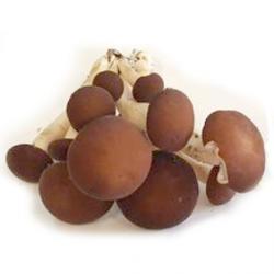 Pholiotes du Peuplier frais bio Savoie (300g)