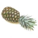 Ananas bio  par avion (pièce)