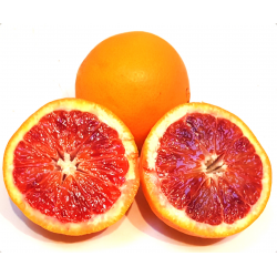 Oranges sanguines bio (1kg)