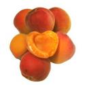 Abricots bio (500g)