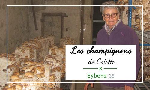 Champignionnière de Colette